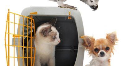 Правила и нормы перевозки домашних животных по морю